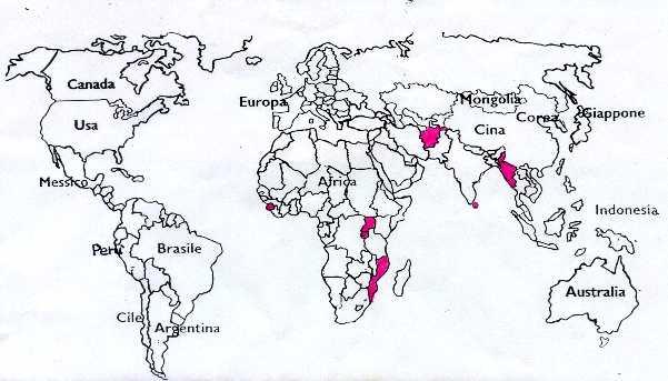 Cartina muta mondo pictures to pin on pinterest tattooskid - Foto della mappa del mondo da stampare ...